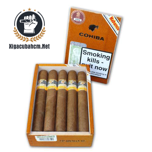 Xì gà Cohiba Siglo VI – Hộp 10 điếu - xigacubahcm.net