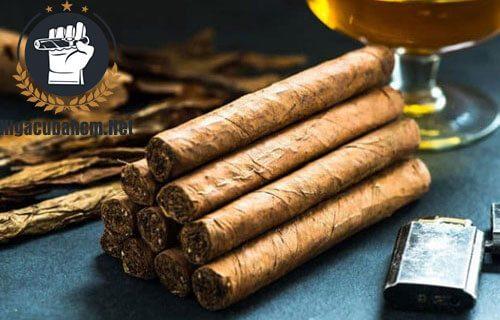 xì gà bị mọt