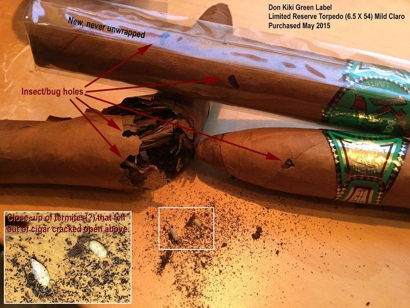 xì gà bị mối mọt